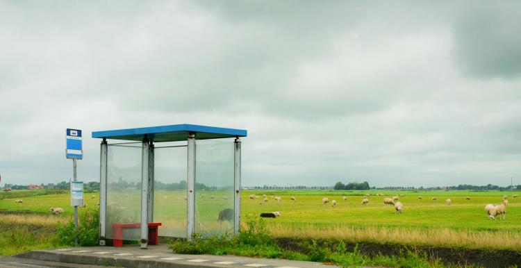 A bus stop in a rural area, with a field and sheep in the background